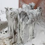 Истински феномен! Ужасен студ скова необичайни места по света!!! Вижте последиците!