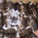 Потресаващо! Жена от Пловдив продава КОТЕШКИ КОЖИ в интернет! Вижте повече!