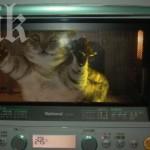 Жена изпече котето си в МИКРОВЪЛНOВАТА! Било непослушно!!!