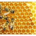 Внимание! Пчелари алармираха за опасен мед по родния пазар!