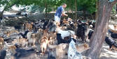 ВИДЕО! Този мъж спаси над 450 кучета, които се бориха за живота си! Вижте как!